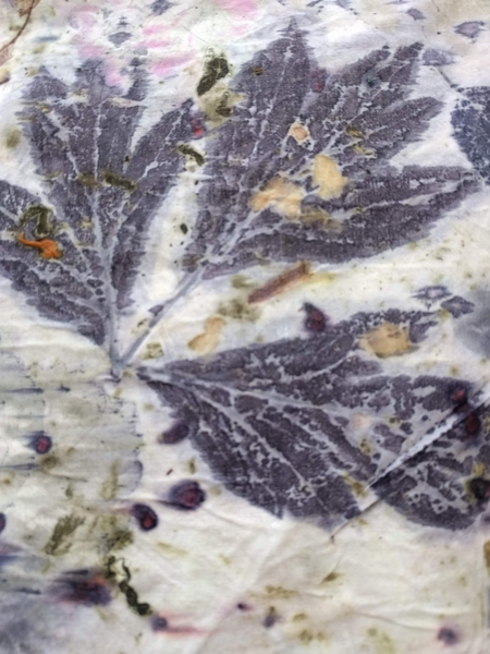 Eco Print | Dyeing & Surface Design