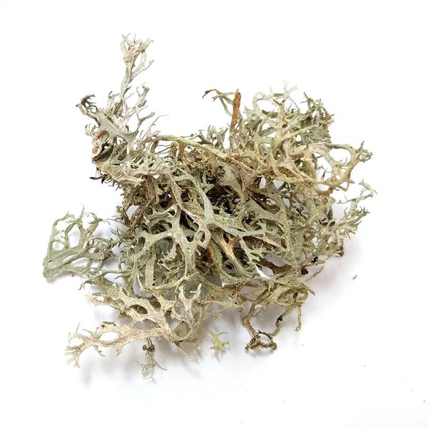 Lichen: Oakmoss - 1 oz | Natural Dyes
