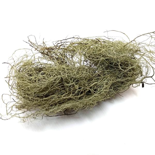 Lichen: Old Man's Beard - 2 oz | Natural Dyes