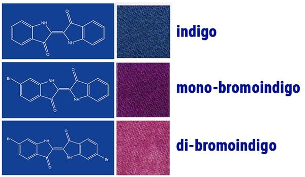Image 2 Indigo Blue
