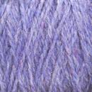 Image Chicory Shetland Cone
