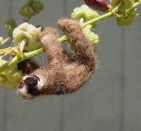 Needle Felting Sloths