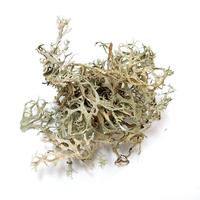 Image Lichen: Evernia prunastri - 1 oz