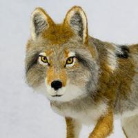Image Needle Felt a Wolf FIF 2020